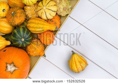 Top Down View On Squashes Over Wooden Surface