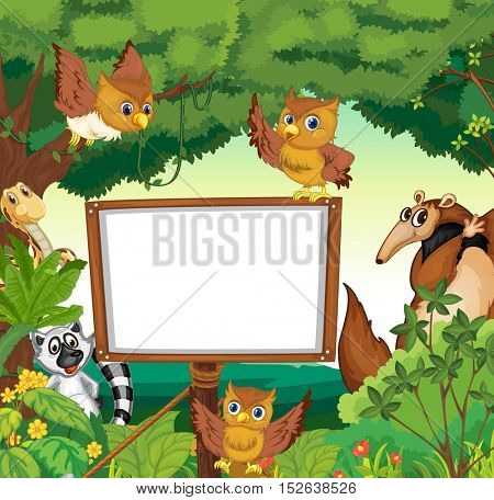 Wild animals and white board in the jungle illustration