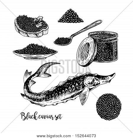 Hand drawn set of black caviar. Retro sketches isolated. Vintage hypster collection. Doodle line graphic design. Black and white drawing fish sturgeon jar spoon plate sandwich. Vector illustration.