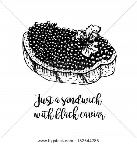 Hand drawn sandwich with black caviar. Retro sketches isolated. Vintage hypster collection. Doodle line graphic design. Black and white drawing sandwich with black caviar. Vector illustration.