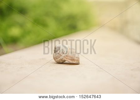Closeup Photo Of Snail In The Nature