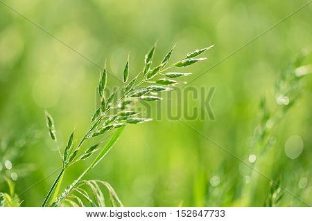 Closeup Photo Of Grass Seed