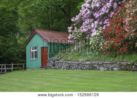 Lake District garden with rhododendrons and corrugated iron shed