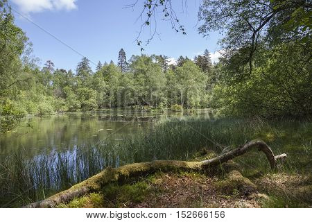 Mossy woodland at Tarn Hows, Lake District, Cumbria, England