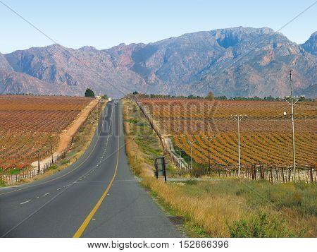 Grape Farms, Western Cape, South Africa 11bvw