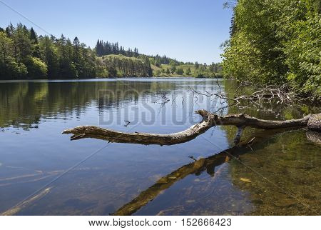 Still waters at Tarn Hows, Lake District, Cumbria, England
