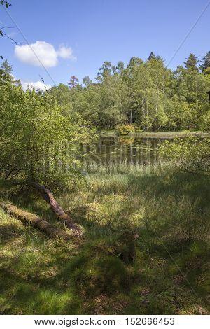 Wild marshland at Tarn Hows, Lake District, Cumbria, England