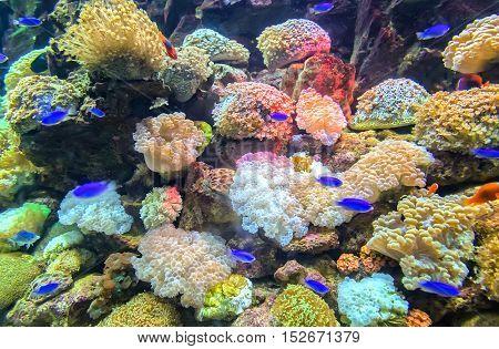 Coral ecosystems in nature colorful beautiful aquarium