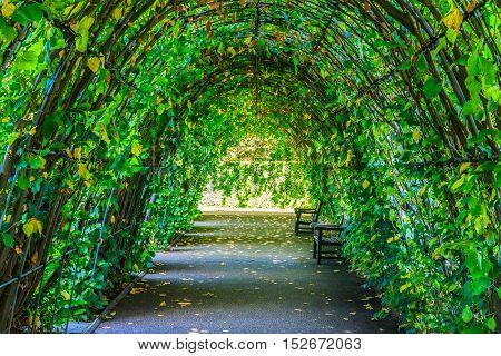 Walkway covered by green leaves in Kensington park London poster