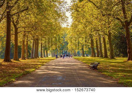 Tree lined street in Hyde Park London autumn season