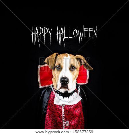 Happy halloween poster with dog in vampire costume. Poster for halloween with dog dressed up as a vampire in black background.