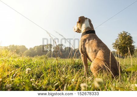 Dog on the lawn. Dog sitting on the lawn on bright sunny morning.