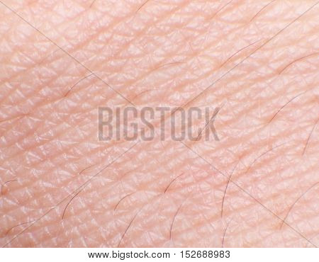 Close up Human Skin (Back of Hand)