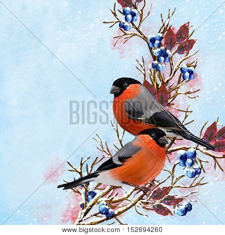 Two birds bullfinch sitting on a branch. Bright sinii berries red leaves snow. Winter background. Vintage postcard old style.