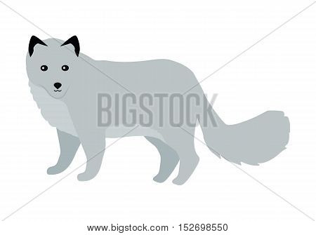 Polar fox flat style vector. Wild predatory animal. North fauna species. For nature concepts, children s books illustrating, printing materials. Fur hunting object. Isolated on white background