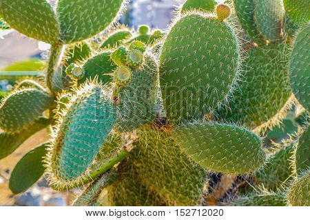Cactus plant with names engraved on leaves in Montjuic cactus garden, Barcelona Spain, Europe