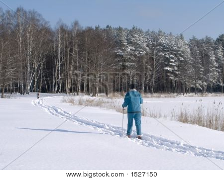 A Skier In Winter Forest