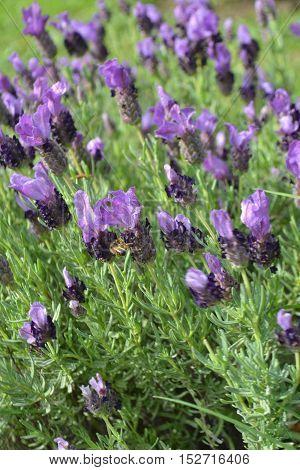 Contrastes de colores violetas y verdes en primavera