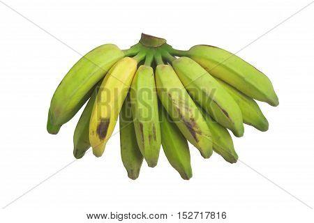Organic Green Banana. Prata on white background