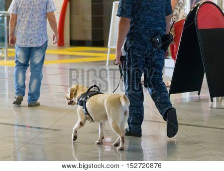 The police officer and service dog go to the airport lounge.