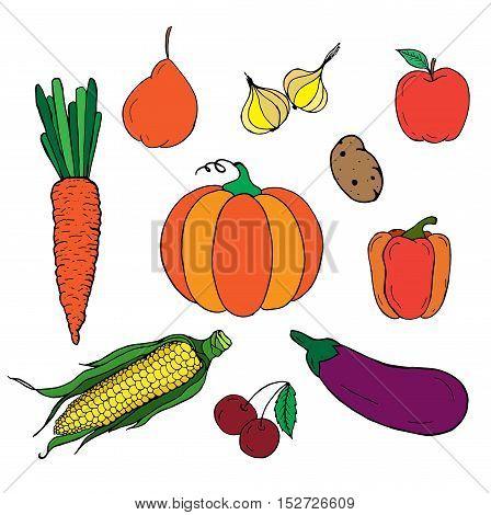Set of vegetables. Autumn harvest. Freehand drawn black white vector illustration. Sketch for coloring page decoration.