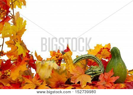Colorful Fall Border Three small gourds on fall leaves isolated on white