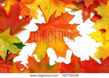 Autumn card of maple leaves. Flat, fall.