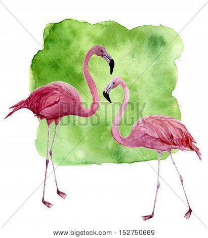 Watercolor two flamingo. Hand painted pink bird illustration with green background isolated on white background. Flamingo print for design.