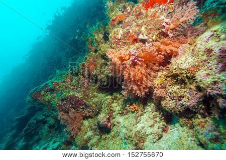 Colorful Ocean Landscape With Red Corals In The Maldives