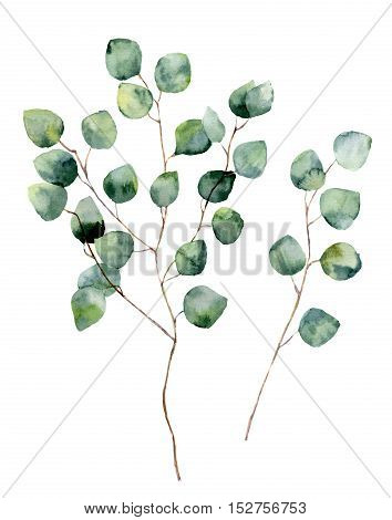 Watercolor silver dollar eucalyptus with round leaves and branches. Hand painted eucalyptus elements. Floral illustration isolated on white background. For design, textile and background
