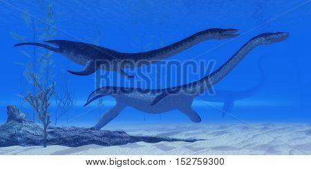 Plesiosaurus Jurassic Reptiles 3D Illustration - Plesiosaurus marine reptile dinosaurs swim together in Jurassic Seas to find their next prey. poster