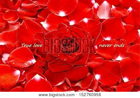 Red rose and red flower petals with text '' True love never ends''