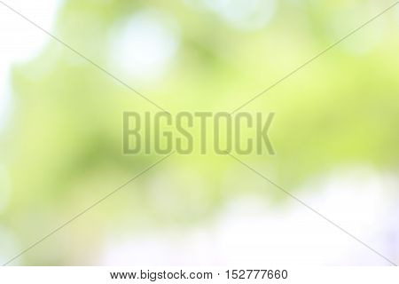 colorful green colors background with bokeh effect