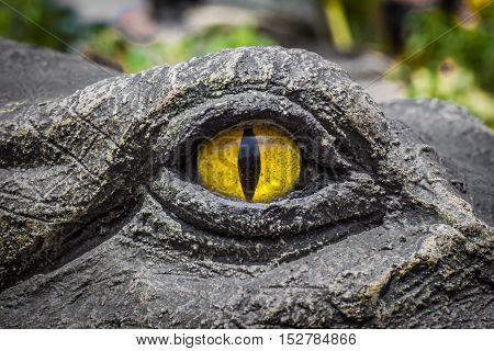 Yellow Eyes Of Crocodiles.