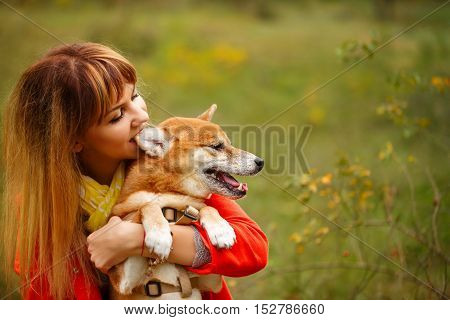 Girl bites an ear Shiba Inu dog in autumn park. Pedigree dog. Funny animals and their owners. Riot of colors of nature. Outdoor Activities.