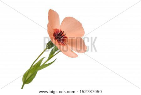 Red small flower decoration on white background