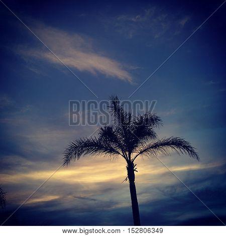 Il cielo assume delle belle sfumature che fanno da sfondo a una bellissima palma.