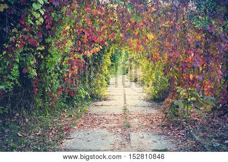 Beautiful lyrical autumn view in the park in vintage colors