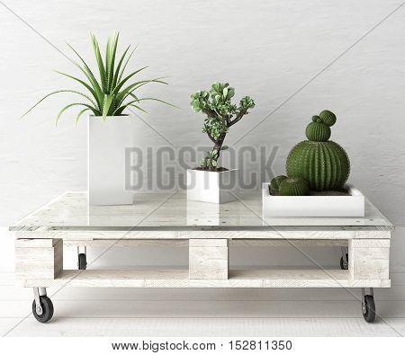 Succulent plant on pallet table, 3d illustration