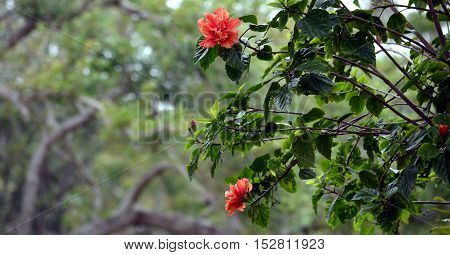 Pink azalea flowers blooming on the tree during Autumn time