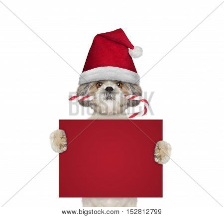 Cute dog with christmas candy holding a card with space for text - isolated on white