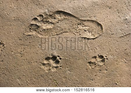 Footprints In The Wadden Sea