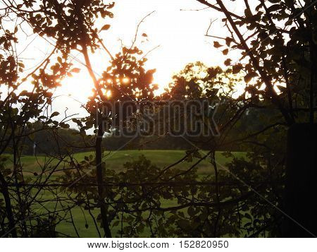 UK sunset over Ifield Golf Course glistening through a hedgerow