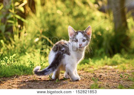 the little kitten looks at you. kitten in a grass