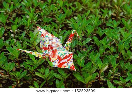 Japanese Paper Crane Origami in Nature Field Red
