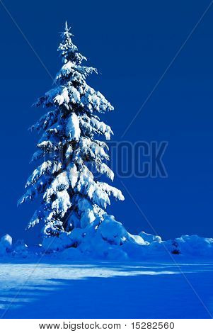Snow covered evergreen on a moonlit silent night.