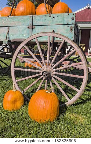 Old Wagon with Pumpkins and Pumpkins in Front of Vintage Wood Wheel