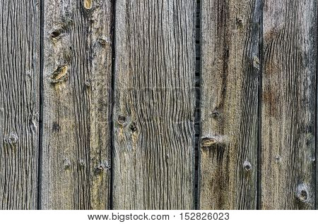 Blank Textured Wood Wall for your Background