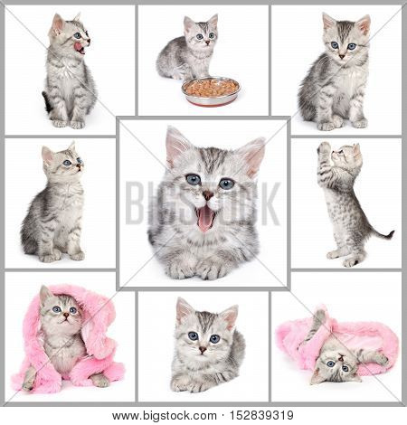 Collage from gray kitten photos. Nine in one