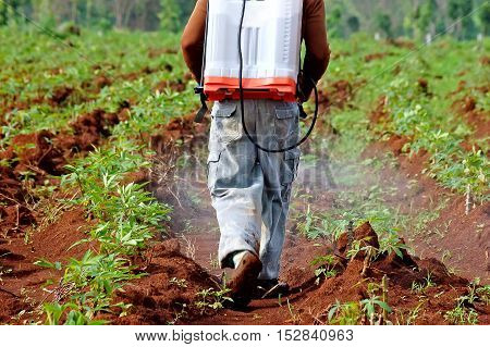 farmer spraying pesticide in the cassava field poster